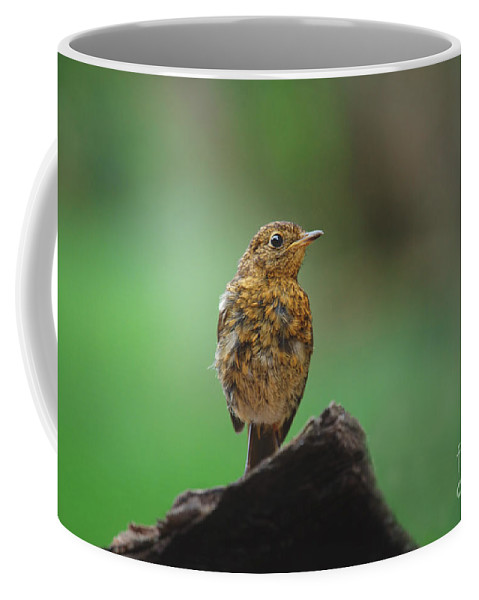 Bird Coffee Mug featuring the photograph Juvenile Robin by Rawshutterbug