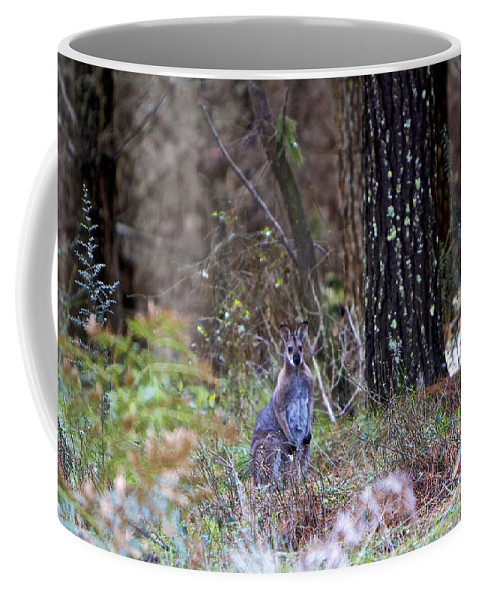 Kangaroo Coffee Mug featuring the photograph Kangaroo In The Forest by Michelle Ngaire