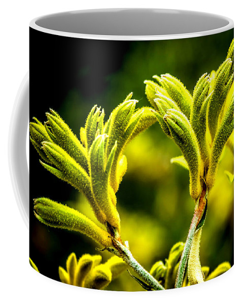 Agriculture Coffee Mug featuring the photograph Kangaroo Paw 2 by Jijo George