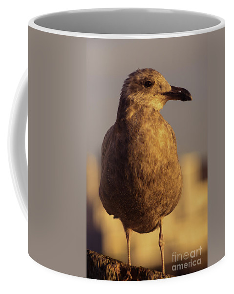 Animal Coffee Mug featuring the photograph Keeping An Eye On Me by Joe Geraci