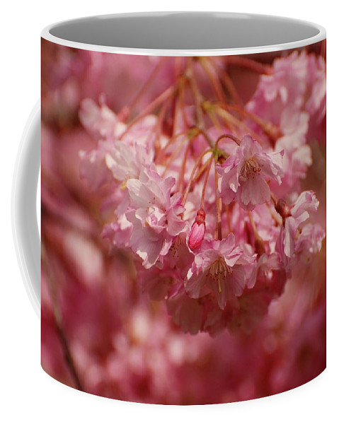 Cherry Blossom Trees Coffee Mug featuring the photograph Keeps Me Hanging On by Angie Tirado
