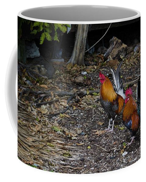 Key West Coffee Mug featuring the photograph Key West Chickens by David Arment