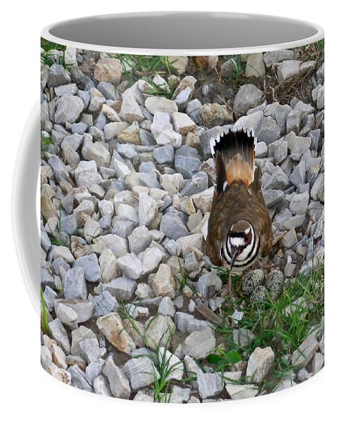 Kildeer Coffee Mug featuring the photograph Kildeer And Eggs by Douglas Barnett