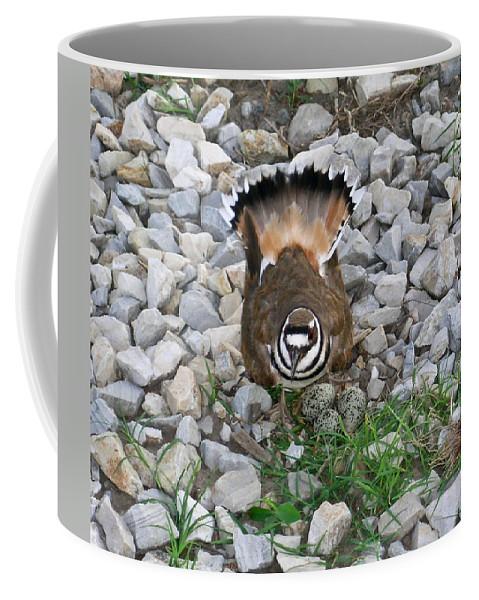 Kildeer Coffee Mug featuring the photograph Kildeer And Nest by Douglas Barnett