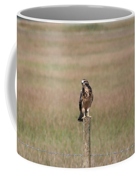 Hawk Wild Bird Nature Grass Fence Barbwire Flying Coffee Mug featuring the photograph King Of His Domain. by Andrea Lawrence