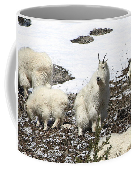 Mountain Goats Coffee Mug featuring the photograph King Of The Hill by DeeLon Merritt