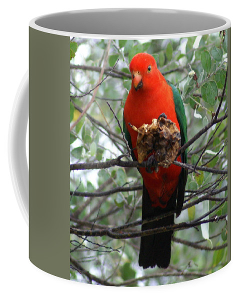Parrot Coffee Mug featuring the photograph King Parrot by Brian Leverton