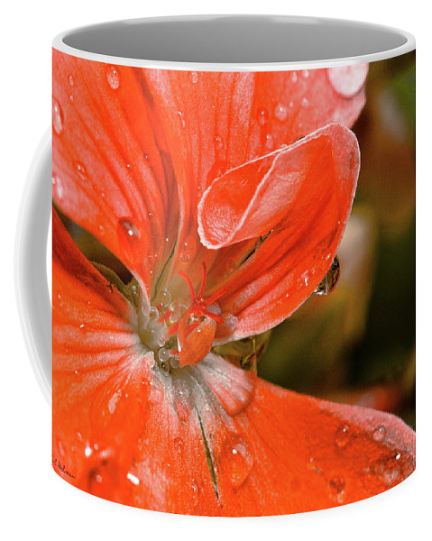 Flower Coffee Mug featuring the photograph Kissed By The Rain by Christopher Holmes