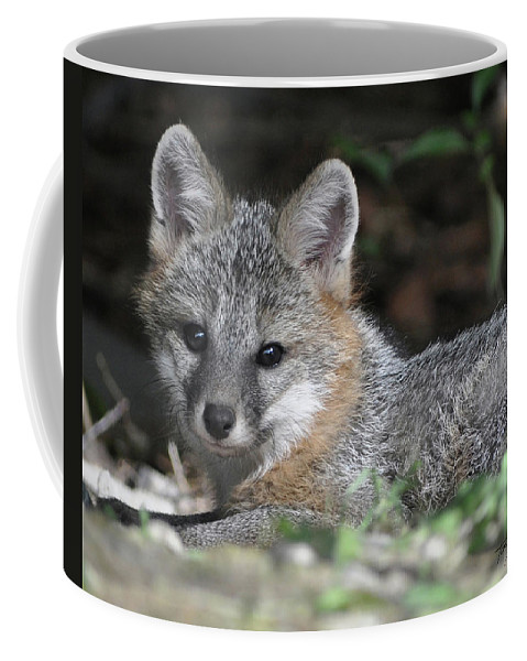 Kit Fox Coffee Mug featuring the photograph Kit Fox1 by Torie Tiffany