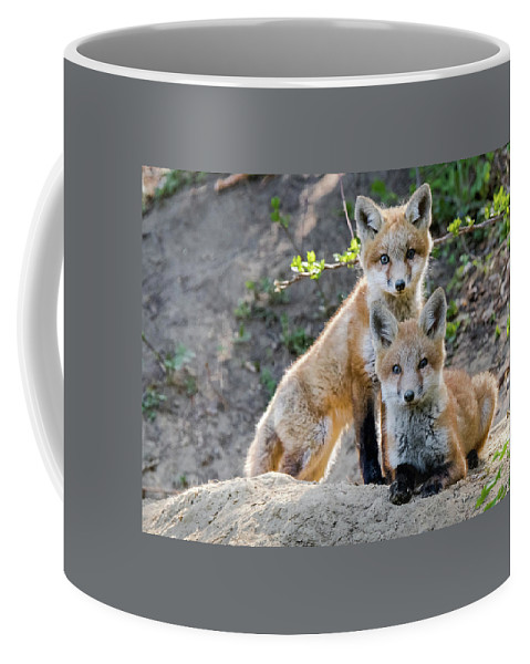 Fox Coffee Mug featuring the photograph Kits At Rest by J H Clery