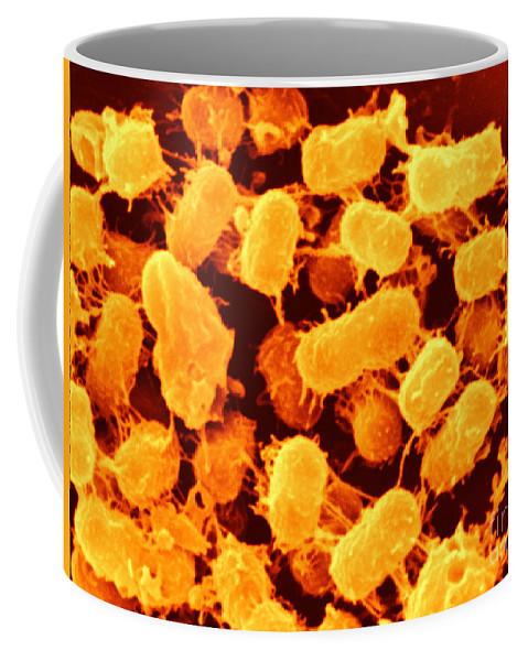 Klebsiella Pneumoniae Coffee Mug featuring the photograph Klebsiella Pneumoniae, Sem by Scimat
