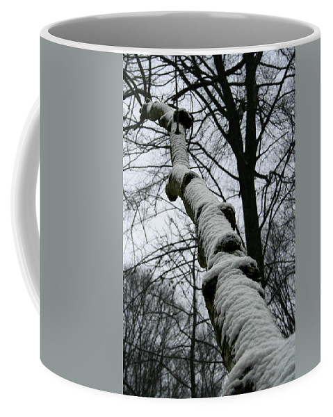 Nature Winter Snow White Cold Quite Peaceful Forest Woods Tree Cover Grey Knot Outdoor Coffee Mug featuring the photograph Knoted by Andrei Shliakhau
