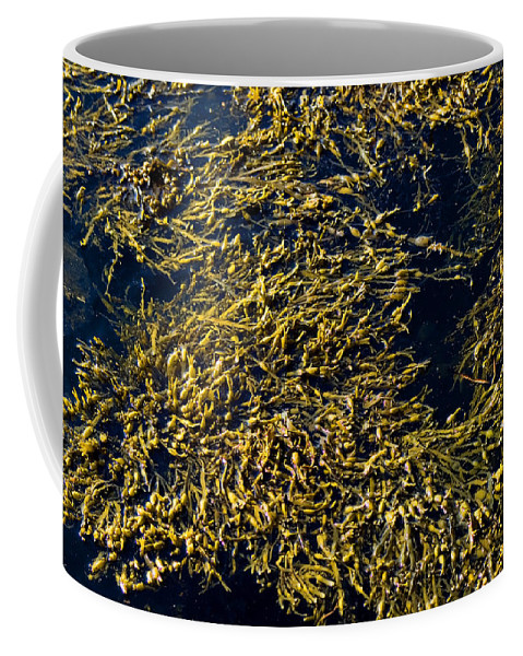 Photography Coffee Mug featuring the photograph Knotted Wrack Seaweed Floating Atop by Todd Gipstein