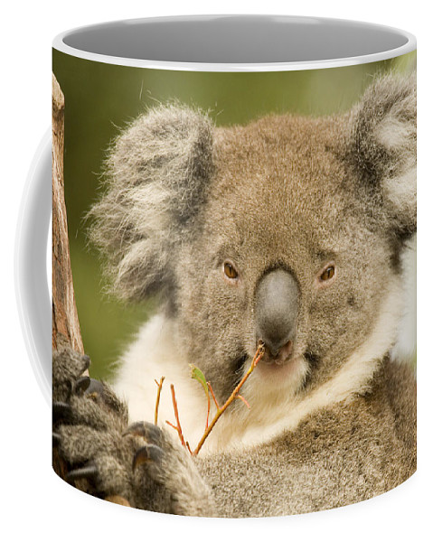 Koala Coffee Mug featuring the photograph Koala Snack by Mike Dawson