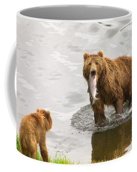 Kodiak Bears Coffee Mug featuring the photograph Kodiak Lunch Break by Moore Northwest Images