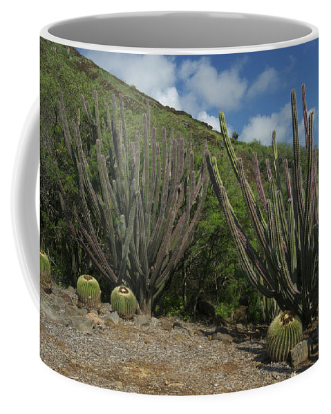 Landscape Coffee Mug featuring the photograph Koko Crater Cacti by Michael Peychich