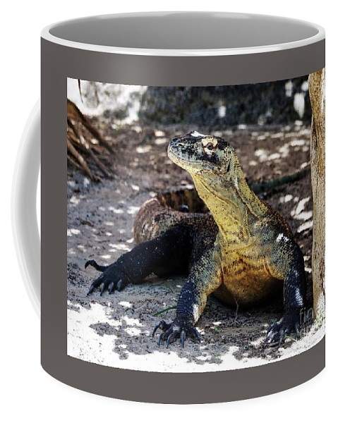 Reptiles Coffee Mug featuring the photograph Komodo Dragon by Diann Fisher