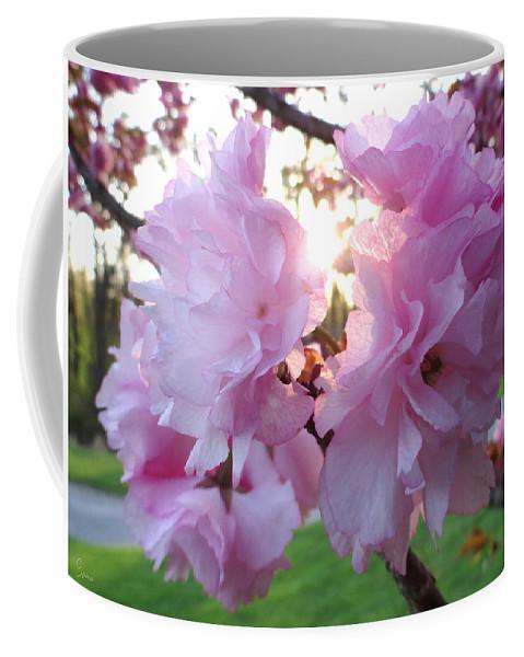 Kwanzan Coffee Mug featuring the photograph Kwanzan Cherry Blossoms by Christopher Spicer