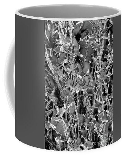 Lace Pricks Snow In Sierra Mountains Coffee Mug featuring the photograph Lace Pricks by Mae Wertz