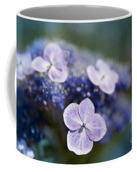 Lacecap Coffee Mug featuring the photograph Lacecap Hydrangea Macrophylla Serrata by Sharon Mau