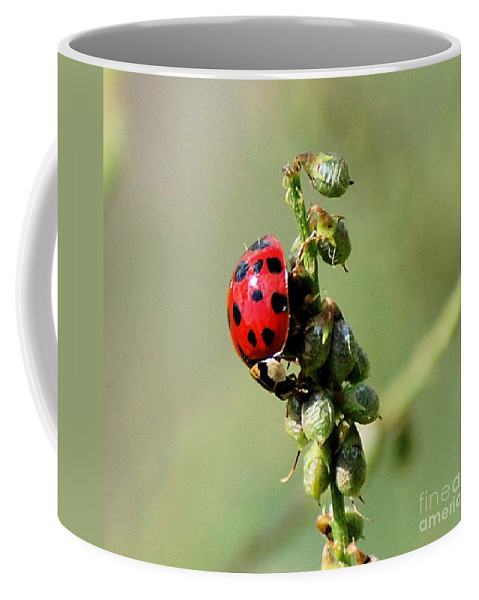 Landscape Coffee Mug featuring the photograph Lady Beetle by David Lane
