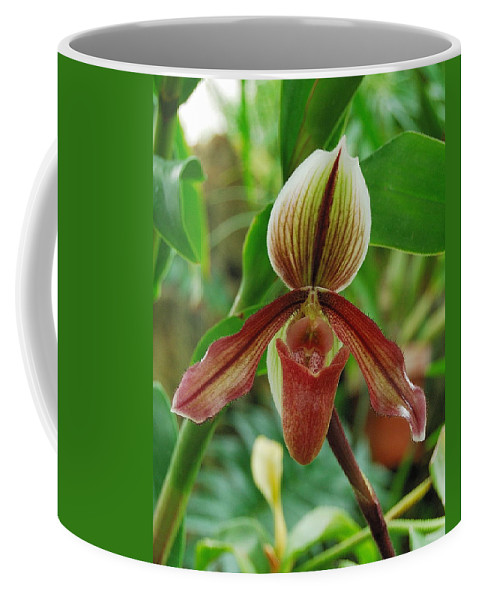 Orchids Coffee Mug featuring the photograph Lady Slipper by Michael Peychich