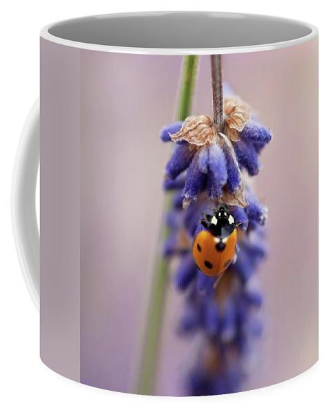 Ladybug Coffee Mug featuring the photograph Ladybird On Norfolk Lavender  #norfolk by John Edwards