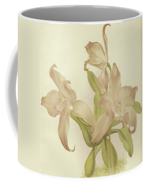 Orchid Coffee Mug featuring the painting Laelia Autumnalis Venusta by English School