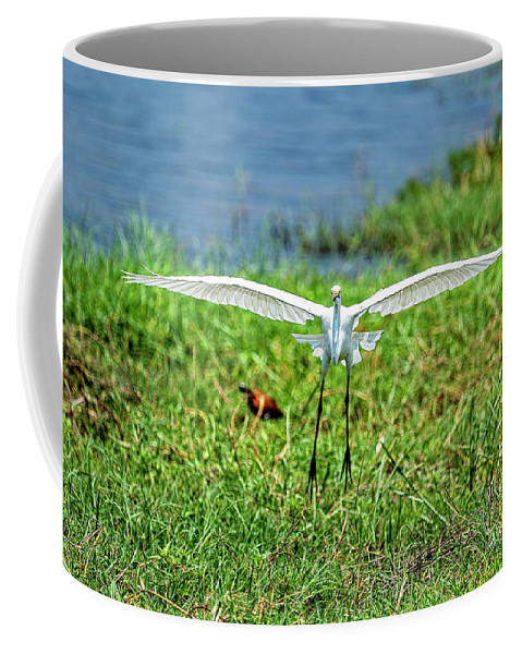 Great White Egret Coffee Mug featuring the photograph Landing Gear Down by Kay Brewer