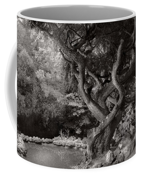 Landscape Coffee Mug featuring the photograph Landscape - The Forbidden Forest by Mike Savad