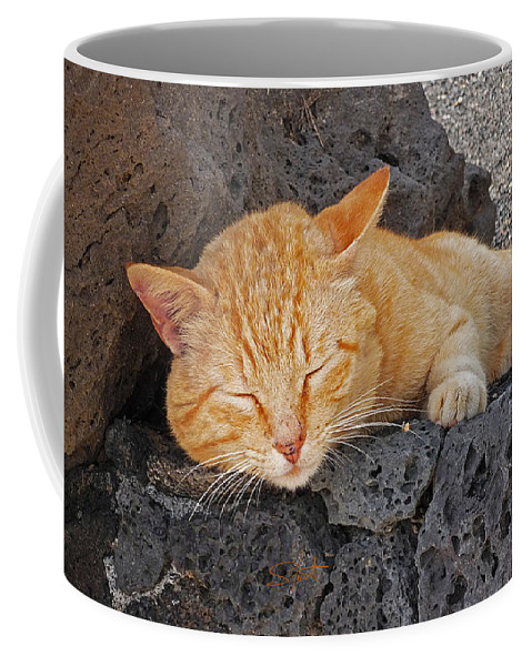 Cat Coffee Mug featuring the photograph Lanzarote Ginger by Charles Stuart