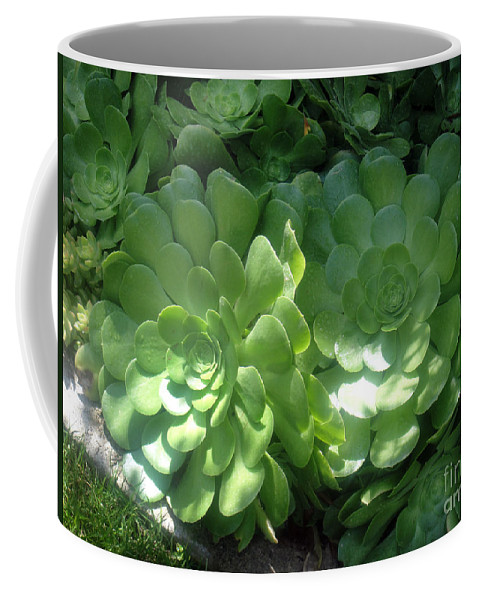 Succulent Coffee Mug featuring the photograph Large Green Succulent Plants by Sofia Metal Queen