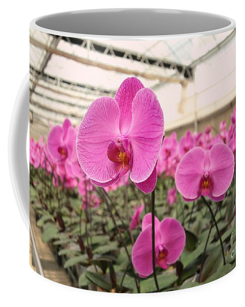 Orchid Coffee Mug featuring the photograph Large Orchid Nursery by Yali Shi
