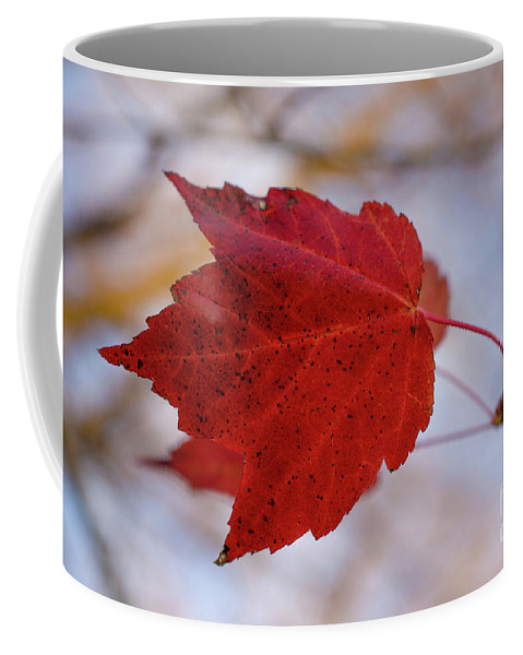 Art Coffee Mug featuring the photograph Last Of The Leaves Nature Photograph by Melissa Fague