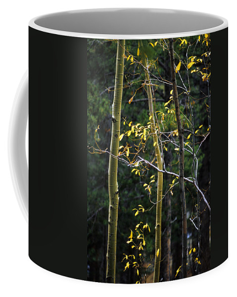 Aspen Coffee Mug featuring the photograph Late Aspen by Jerry McElroy