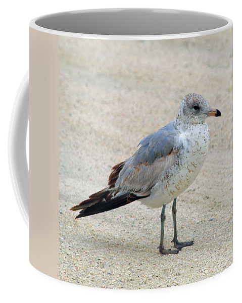 Laughing; Gull; Seagull; Bird; Waterfowl; Seashore; Sebastian; Inlet; Flying; Florida; Larus; Atrici Coffee Mug featuring the photograph Laughing Gull by Allan Hughes