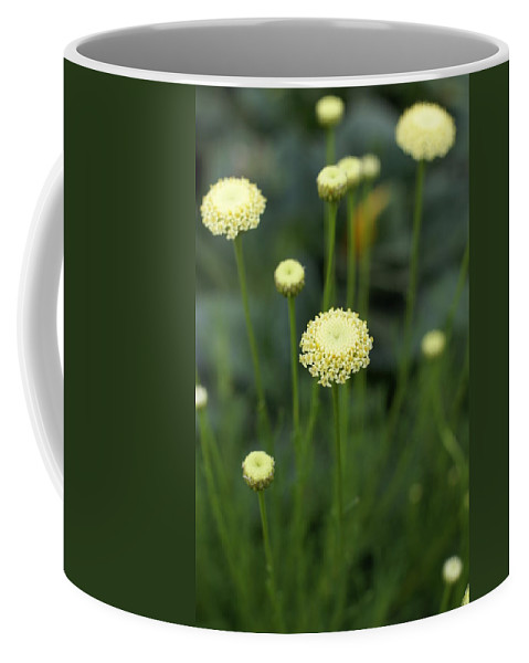 Flower Coffee Mug featuring the photograph Lavender Cotton by Heidi Poulin
