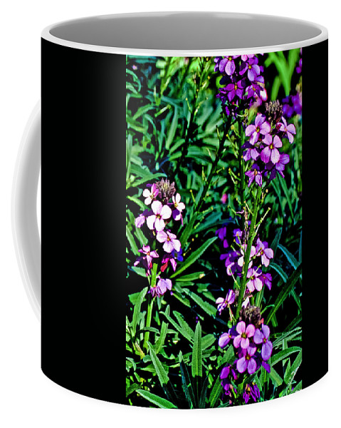 Verbena At Pilgrim Place In Claremont Coffee Mug featuring the photograph Verbena At Pilgrim Place In Claremont-california  by Ruth Hager