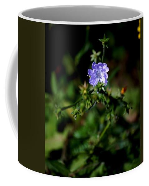 Digital Photograph Coffee Mug featuring the photograph Lavender Hue by David Lane