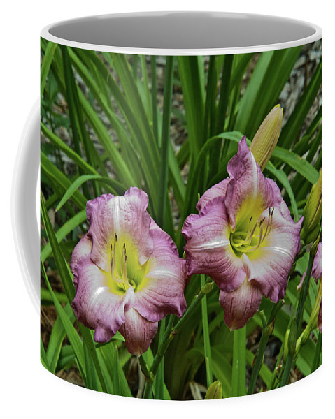 Lavender Coffee Mug featuring the photograph Lavender Lily Triad by Douglas Barnett