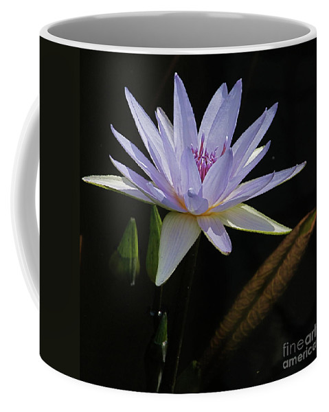 Lavender Coffee Mug featuring the photograph Lavender Tropical Water Lily by Byron Varvarigos
