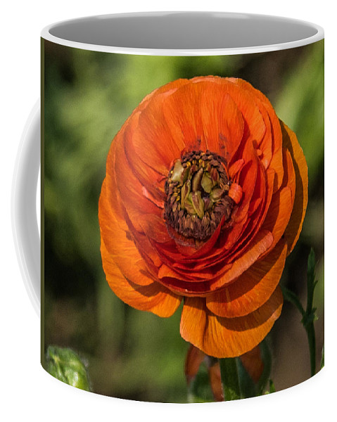 Flower Coffee Mug featuring the photograph Layered Beauty by Anupam Gupta
