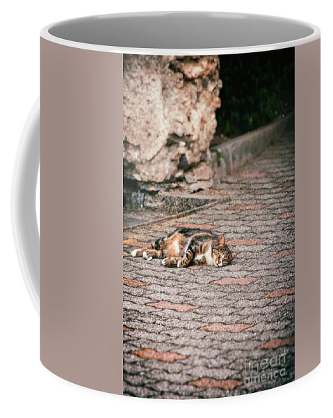 Animal Coffee Mug featuring the photograph Lazy Cat  by Silvia Ganora
