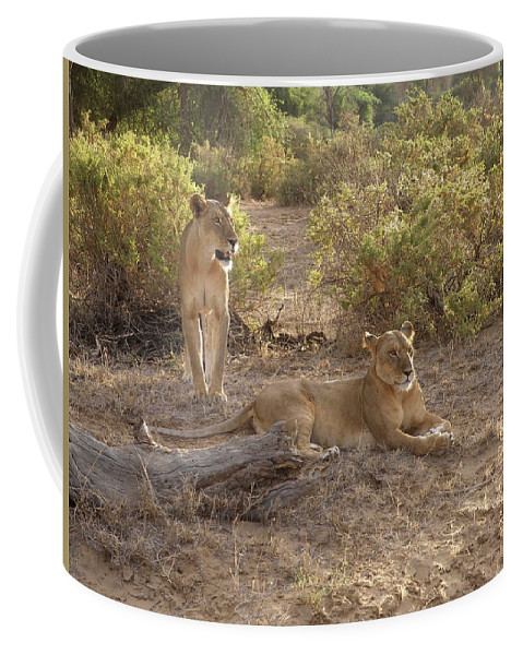 Samburu Coffee Mug featuring the photograph Lazy Samburu Afternoon by Rhoda Gerig
