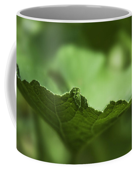 3d Coffee Mug featuring the photograph Leaf Abstract by Svetlana Sewell