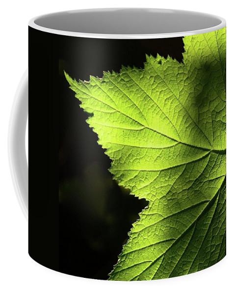 Oregon Coffee Mug featuring the photograph Greenvein by Cher Rydberg