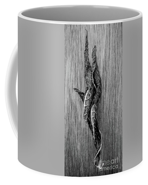 Still Life Coffee Mug featuring the photograph Leaf Entwined In Black And White by James Aiken