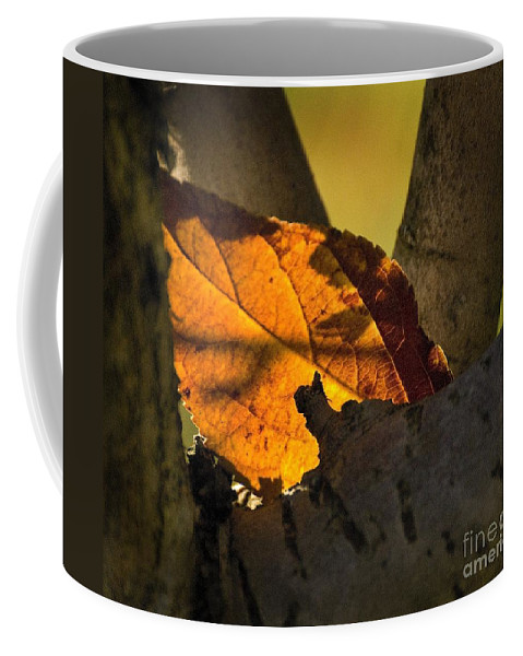 California Scenes Coffee Mug featuring the photograph Leaf In Fork by Norman Andrus