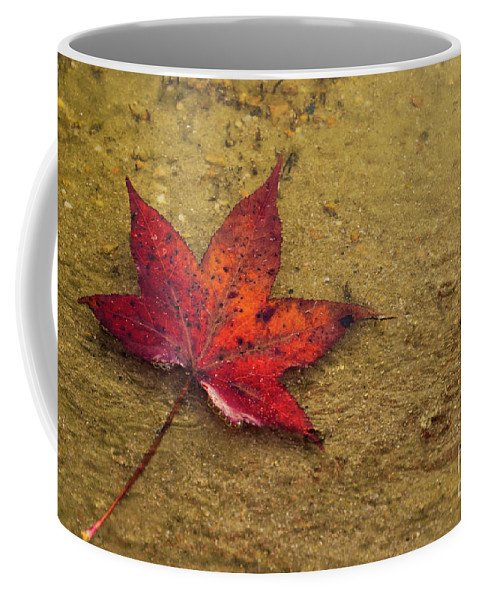 Foliage Coffee Mug featuring the photograph Leaf In The Rain Nature Photograph by Melissa Fague