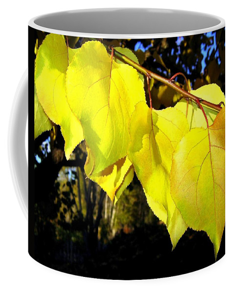 Apricot Leaves Coffee Mug featuring the photograph Leaf Line by Will Borden